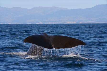 Intelligente Wale